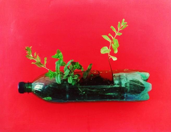 jardinière avec bouteille en plastique