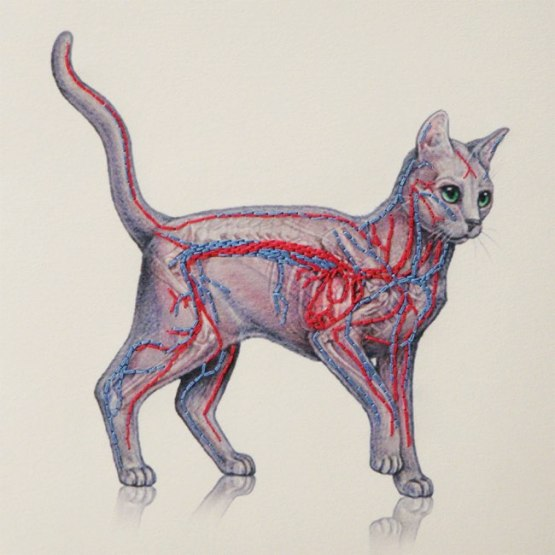 carnets-broderies-illustrations-fabulous-cat-5