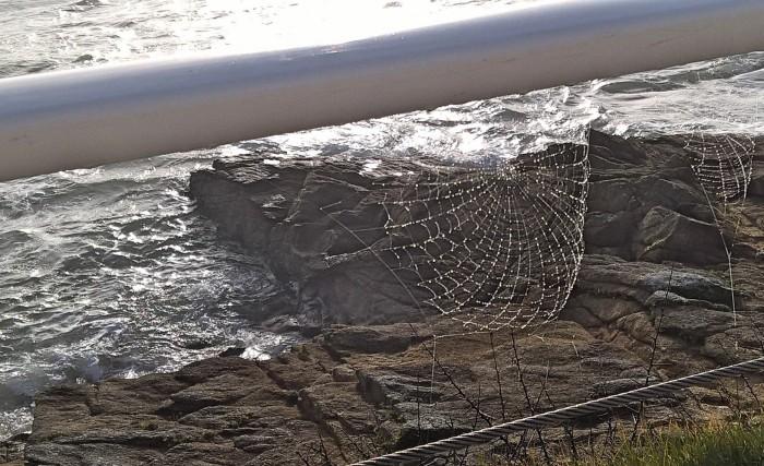 toile d'araignée.